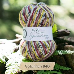 West Yorkshire Spinners - Signature 4ply - Goldfinch