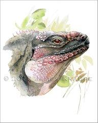 "Cyclura cychlura figginsi. Watercolor, 8"" x 10"" Framed Original Painting"