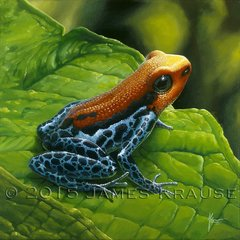 "Ranitomeya reticulata, 12""x12"" Canvas Giclee"