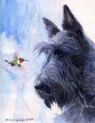 Trio of Scottish Terrier Magnets by Michael Steddum