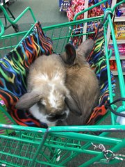 Shopping Cart Hammock