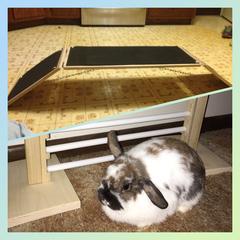House Rabbit Bridge & Jump Bundle
