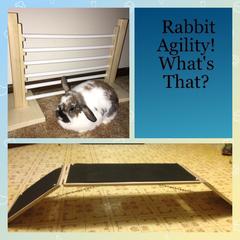 House Rabbit Bridge, Jump & Book Bundle