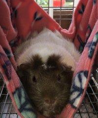 Hammock for guinea pigs & small rabbits