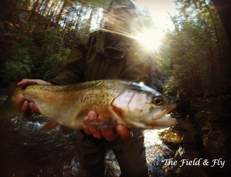 fly fishing trips Atlanta Georgia, fly fishing gifts Georgia