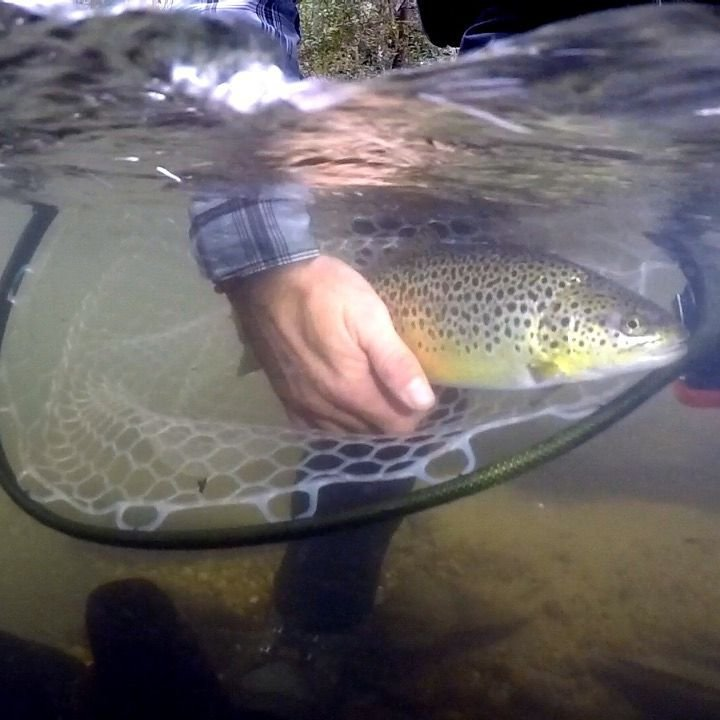 fly fishing trips in Georgia, fly fishing Atlanta Georgia