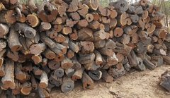 BULK / WHOLESALE Desert Ironwood Logs