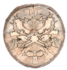 Spalted Spirit #15