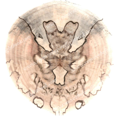Spalted Spirit #11