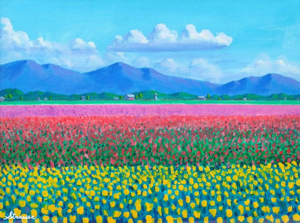 Tulip Fields   12 x 16   Canvas Print