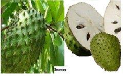 Soursop (Graviola) Body Pain, Swelling & Stiffness Care Cream (4 oz) - *INTERNATIONAL SHIPPING