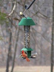 Squirrel Defeater Bird Seed Feeder