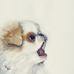 """Omar"" ... Japanese Chin, 5 x 7 Note Cards & 8x10 Matted Print"