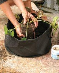 """Aquatic Plant Pot 6"""" Round (2 pack)"""