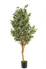 SUPER REALISTIC FOLIAGE Artificial 180cm Ficus Tree / Varigated Colour