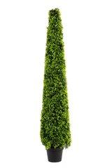 SUPER REALISTIC FOLIAGE Artificial 5 Foot Boxwood Cone