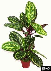 Artificial Plant Large 90cm Calathea Veitchiane Plant