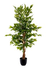 Ficus Tree with Natural Trunk 125cm