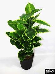 Artificial Large 110cm Rubber Ficus