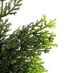 Cedar Topiary 58cm