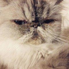 I am not Grumpy.