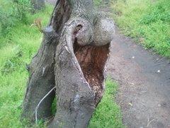 Tree Essences (Dry Herb)