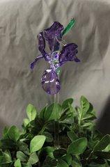 Iris Plant Sticks