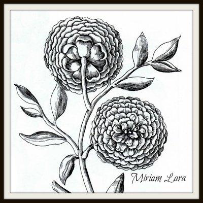 Miriam Lara Floral boutique
