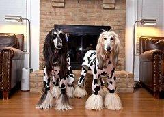 Large Dog Jammies Choose Your Print
