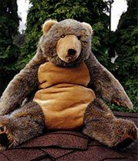Chuck (Dear Bears)