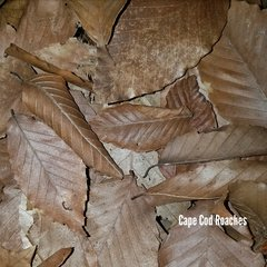 Deciduous Hardwood Beech & Oak Leaves