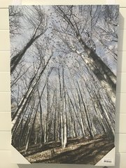 beautiful Trees on Hill Banking liquid glitter canvas wall art glitter picture