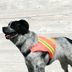 Dog High Visibility Ultra Vest