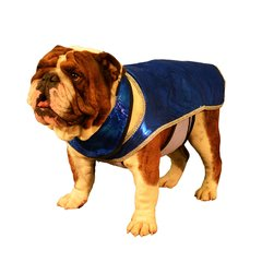 Fashion Dog Cool Coat with tummy panel and matching cool collar