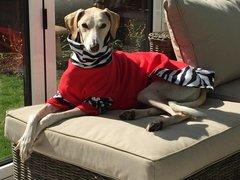 Dog Fleece Jumper