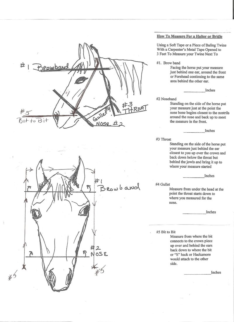 how to bridle train a horse