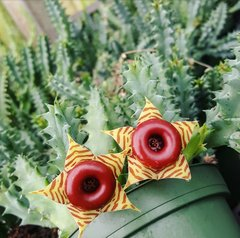 Bundle - 4 Inch Planters - 10 Cacti