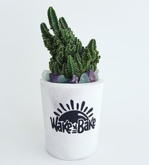 Cement Planter - Wake N Bake