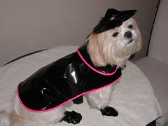Dog Raincoats: New England's Fisherman Dog Raincoat w/Cotton Liner & Hat