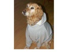 Hooded Dog Sweatshirts: Medium Weight Hoodie Dog Sweatshirt Handmade USA