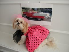 Dog Dresses: 50's Remembered Cotton Pink w/Black Polka Dots Dog Dress