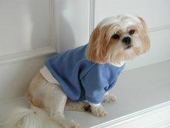 Dog Sweatshirts: Saturday Sweats Dog Sweatshirt Handmade by Alexis USA