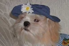 Dog Hats: Miss Daisy Blue Denim Casual Hat for Dogs Made in USA by Alexis