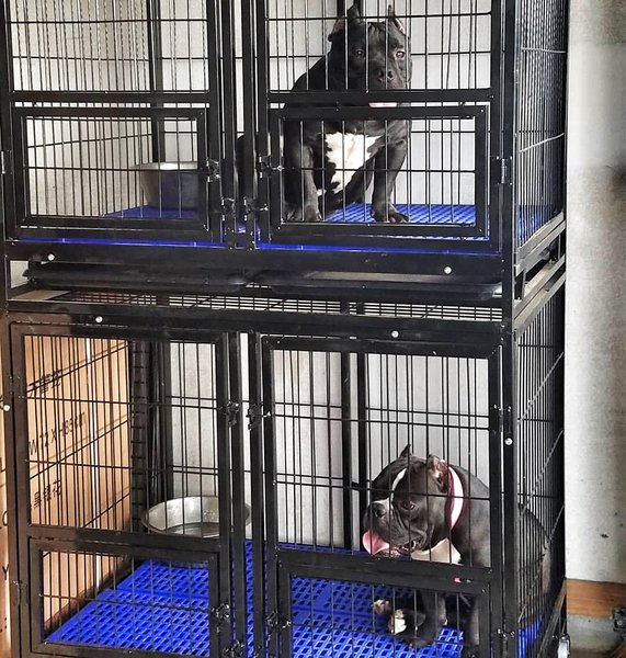 Black Double Door Kennel Heavy Duty Kennels Amp Cages