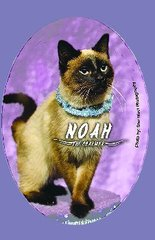 "Noah ""The Charmer"" Button/Magnet"