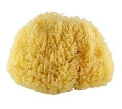 Large Natural Body Sponge. Renewable Resource as it grows back after being cut.
