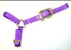 Sheep Halter with Adjustable Chin Strap