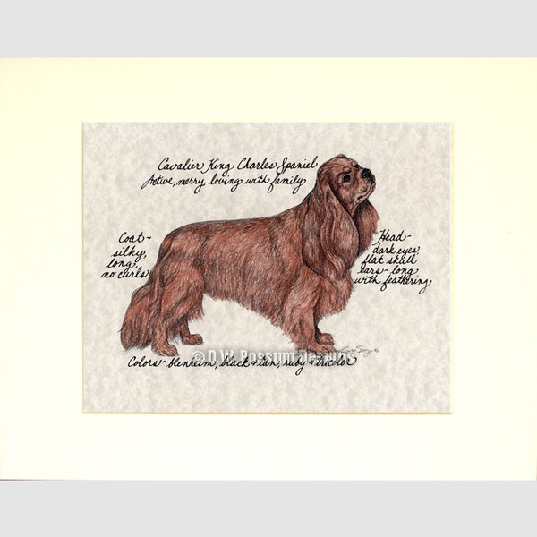 Cavalier King Charles Spaniel Ruby Original Hand Colored Print