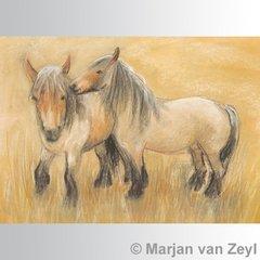 Belgian Horses postcard