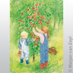Apple Harvest 1 pc postcard